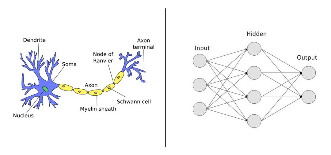 Neural_Network_Brain_Mimic